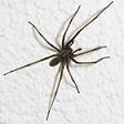 spider picture